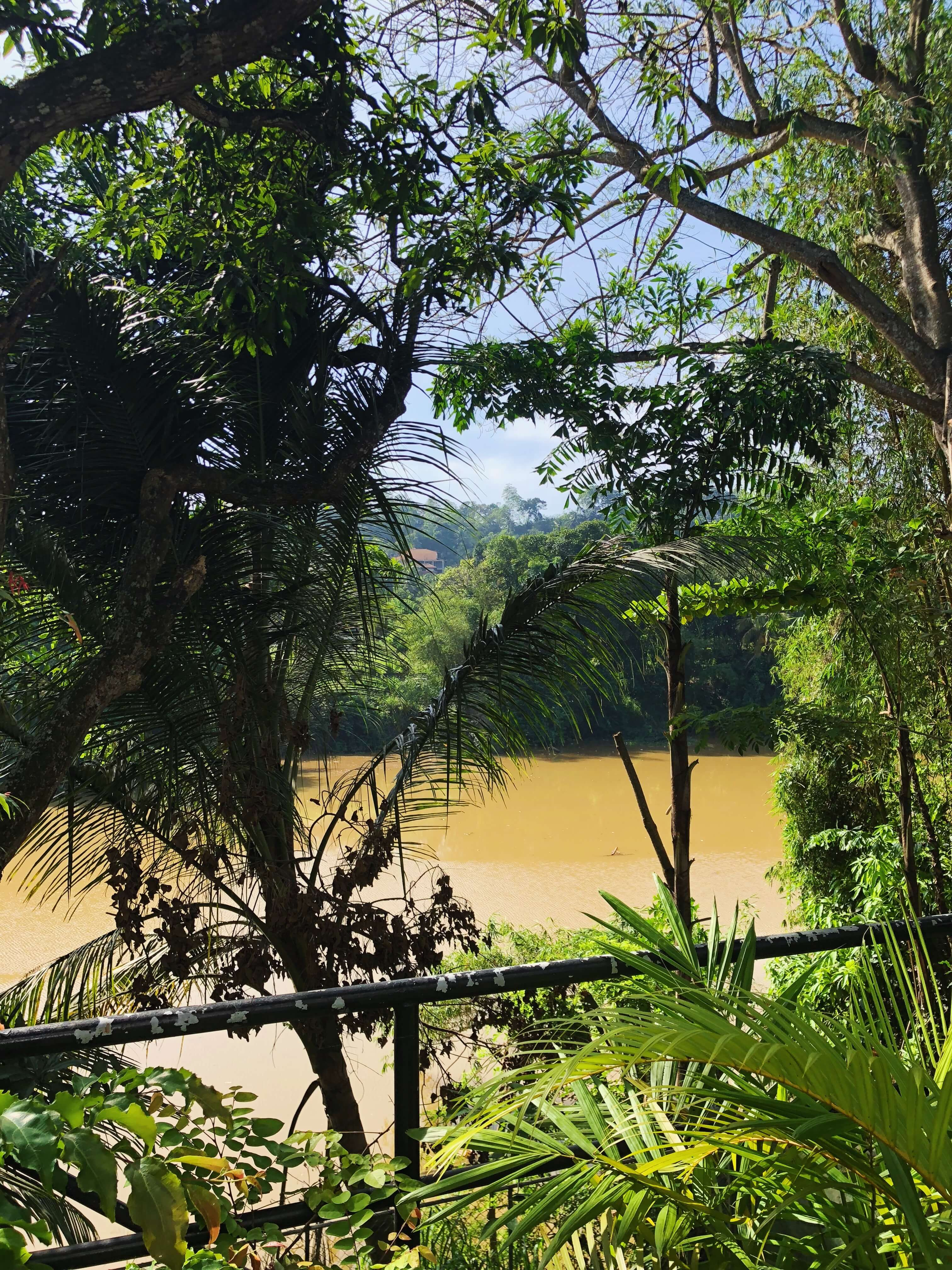 Backyard view of the Mahaweli River